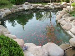西安景觀水人工湖水處理設備