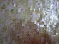 印尼黄蝶贝工字长方形马赛克密拼背景墙 2