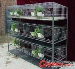 批發現貨雞鴿兔籠