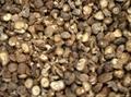 空氣能熱泵香菇菌類脫水乾燥烘乾設備 3