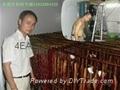 川式香腸臘肉低溫乾燥烘乾機系統設備 2