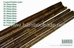 豹紋竹(斑竹)