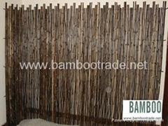 紫竹和斑竹小篱笆