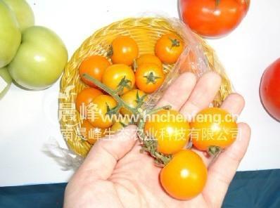 黄色小番茄种子 2