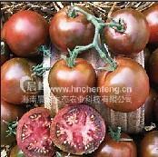 大黑番茄种子