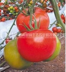 大紅果番茄