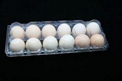 plastic egg tray quail egg tray egg packaging container