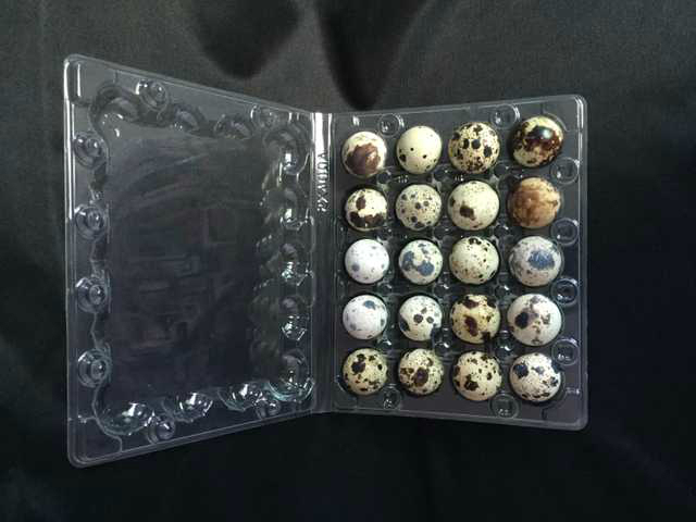 plastic quail egg packaging tray container 12 holes 2