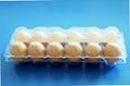 clamshell egg tray plastic egg tray 6/12