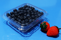 clamshells blister  plastic blueberry packaging container 125 gram 3