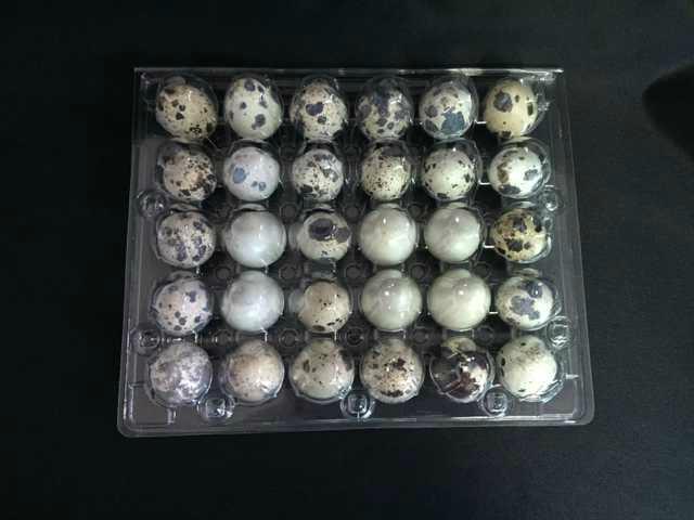 plastic quail egg tray quail egg packing container 30 slots holes packs 2