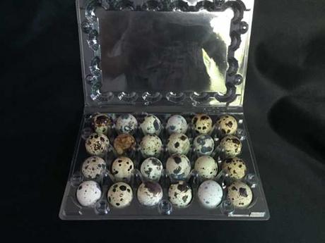 plastic quail egg tray quail egg packing container 30 slots 3