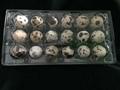 plastic quail egg tray quail egg packing container 30 slots 1