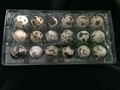 plastic quail egg tray quail egg packing container 30 slots holes packs 1