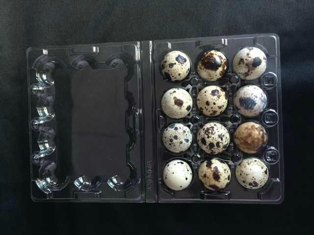 plastic quail egg tray quail egg packing container 30 slots holes packs 4