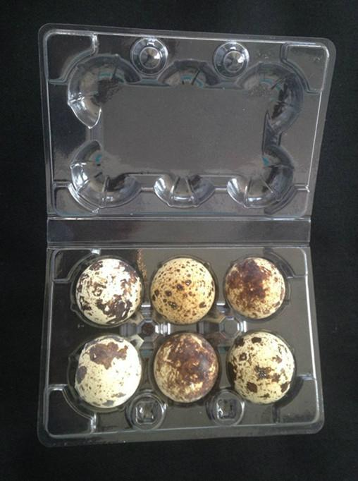 plastic quail egg tray quail egg packing container 30 slots holes packs 5