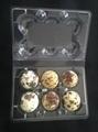 plastic quail egg tray quail egg packing container 30 slots 5