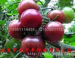 中亚3号--黑番茄种子
