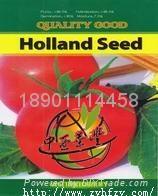 西红柿种子荷兰金粉 1