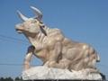 石雕牛 3