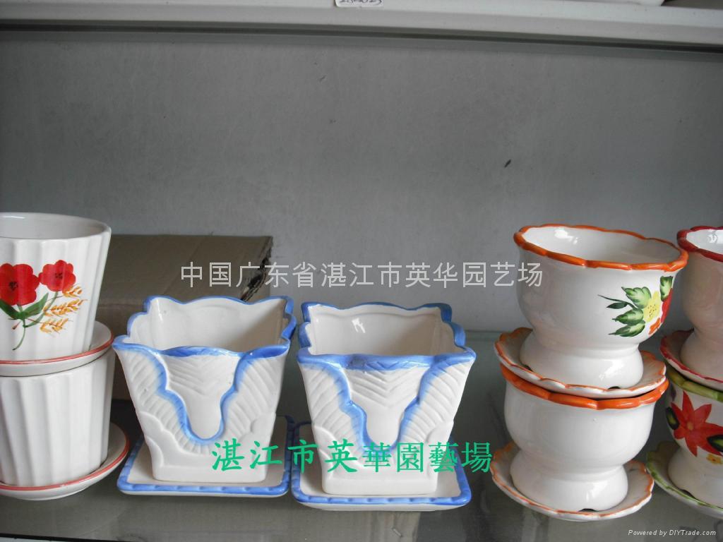 lucky bamboo pots 3