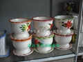 富貴竹瓷盆 5