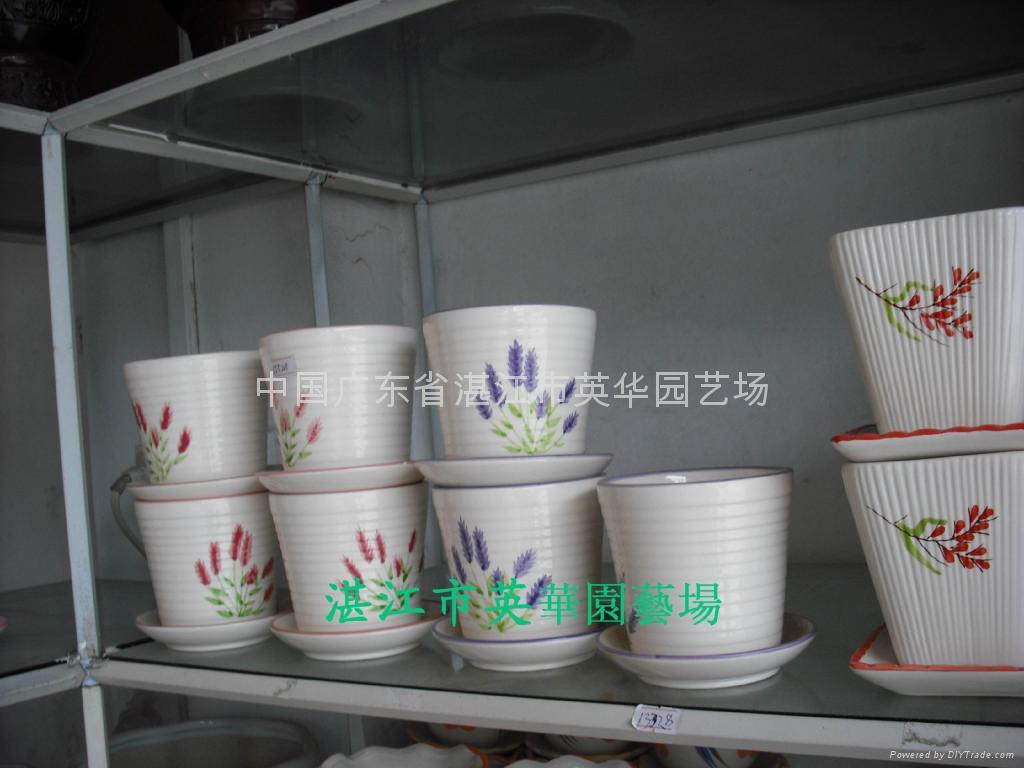 lucky bamboo pots 2