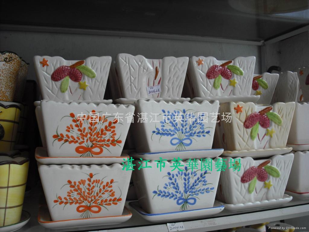 lucky bamboo pots 4