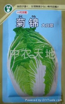 菊錦春白菜種子  1