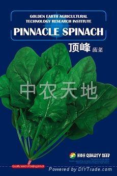 頂峰進口菠菜種子 1