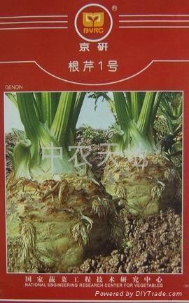 根芹種子 2