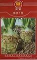 根芹种子 2