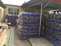 Supply Thai Plastic Mesh 3
