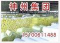 神州玻璃棉 3