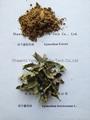 Epimedium Breviconum Extract Icariin