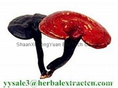 SALE! Reishi Mushroom Ex