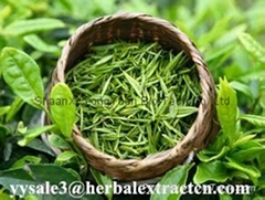 NATURA Green Tea Extract water soluble  antioxidant ingredient  Yongyuan