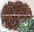 Fenugreek Seed P.E. 4-Hydroxyisoleucine