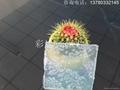 彩达胶片厂供应玉砂EVA玻璃胶