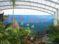 生态餐厅阳光板