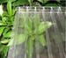 農業溫室防霧滴聚碳酸酯板