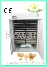 CE certification chicken