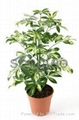 Professional Supplier of Artificial Bonsai Tree with High Quality at Best Price 3