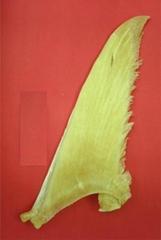 """Pectoral Fin (21"""" inch)"""