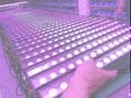 LED洗牆燈4in1-點控 3