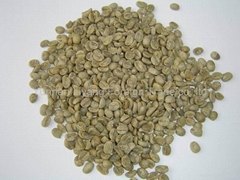arabica green coffee beans A grade manufacturer supply
