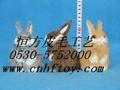造型優美的兔子動物玩具