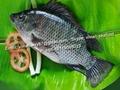 Frozen Black Tilapia (Oreochromis Niloticus)