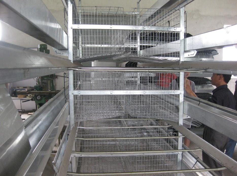 雞飼養設備 3