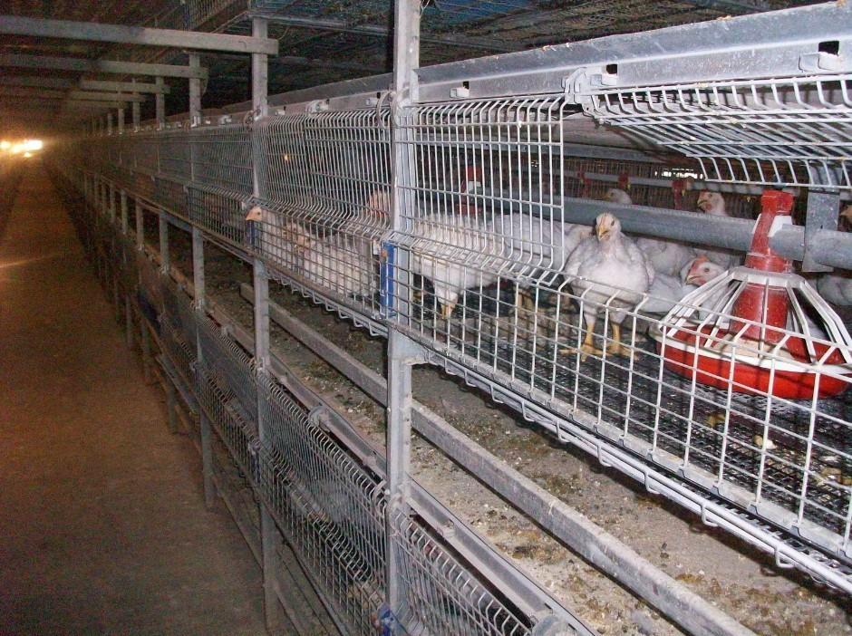 雞飼養設備 4
